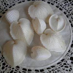 Cockle Shells And Paper Beads